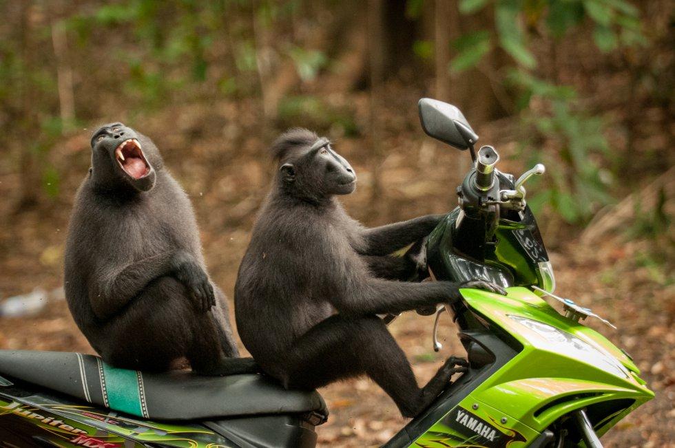 Imagenes curiosas divertidas de animales ante las cámaras