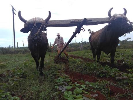 nuevo impuestos sobre los campesinos podría repercutir en un alza de precios de alimentos