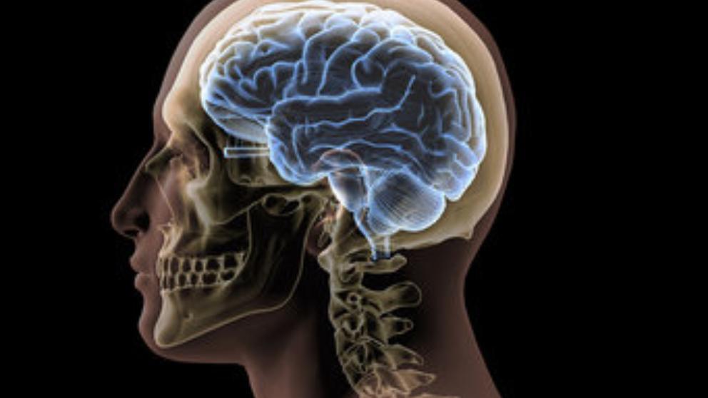 En el cerebro recide la inteligencia genética el entorno la modifica