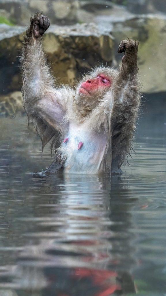 Animales más graciosos fotos premiadas
