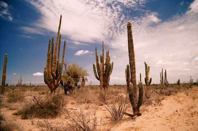 Cubano es rescatado en el desierto mexicano intentando cruzar frontera de EEUU